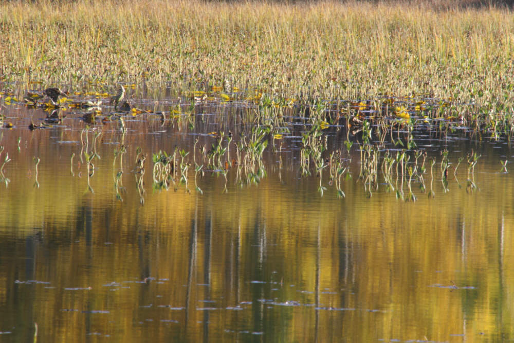 http://habitablezone.com/wp-content/uploads/2011/05/061-water-lillies-and-meadow-lakes-basin-1.jpg